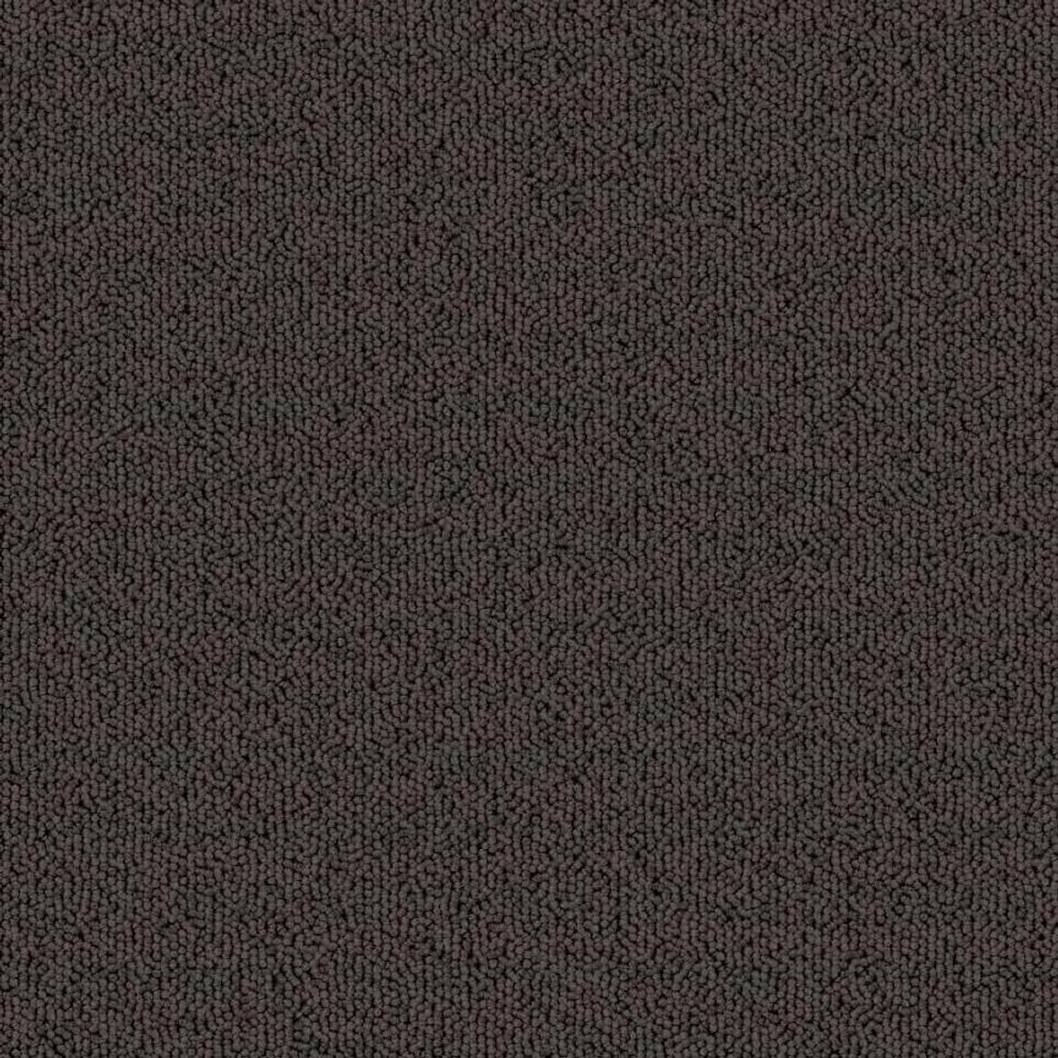 Dark Taupe thumbnail